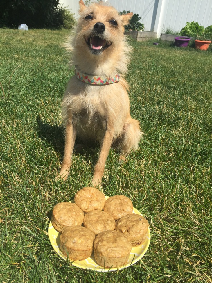 banana muffins, dog, happy dog